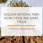 Sequoia National Park – WOW Those are Giant Trees!