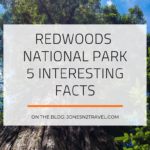 Redwoods National Park – 5 Interesting Facts