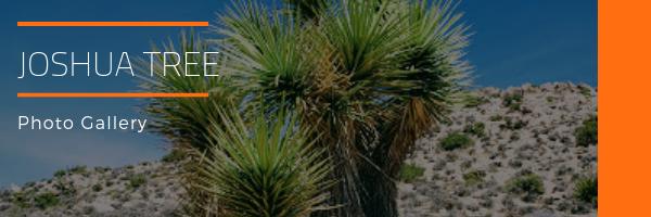 Joshua Tree National Park Photo Gallery