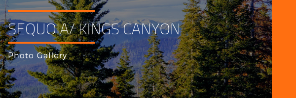 Sequoia/Kings Canyon National Park Photo Gallery