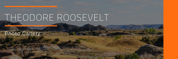 Theodore Roosevelt National Park Photo Gallery
