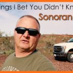 5 Things I Bet You Didn't Know – Sonoran Desert