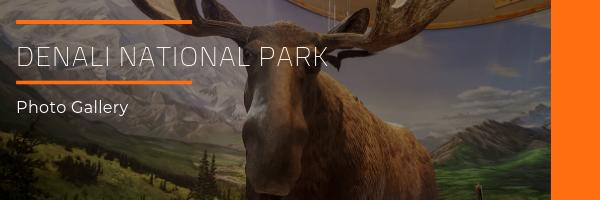 Denali National Park Photo Gallery