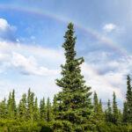 Boondocking   Near Denali National Park   Healy, Alaska